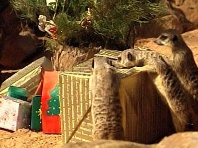 Как отправить подарок в австралию 31
