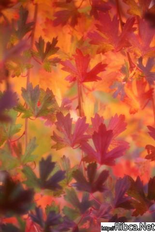 gallery_229_39298.jpg
