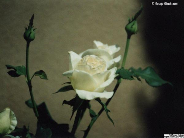 gallery_243_60808.jpg