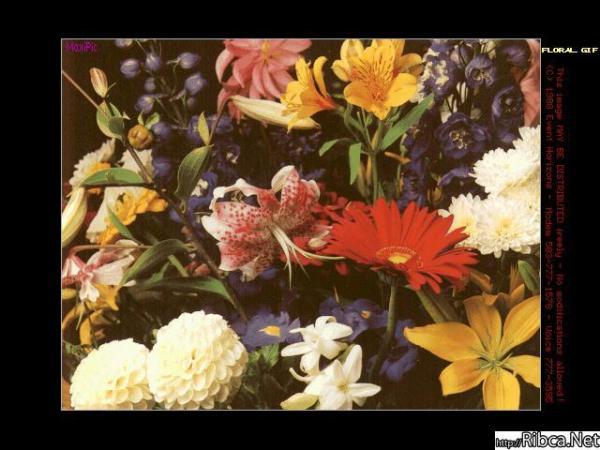 gallery_243_905.jpg