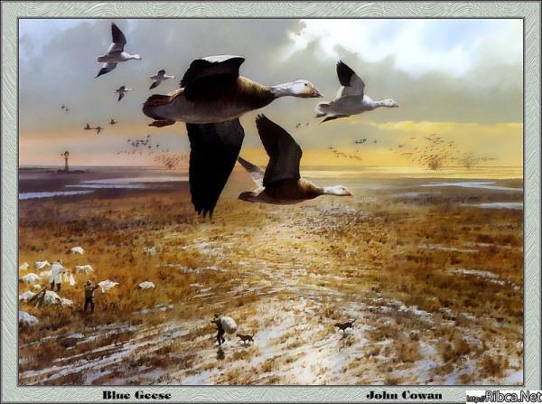 gallery_258_34024.jpg